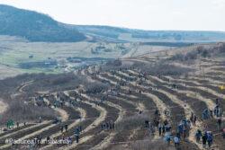"""In Padurea Transilvania s-au plantat pomi """"personalizati"""""""