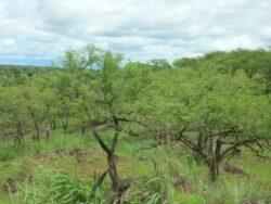 Peste 500 de hectare vor fi impadurite la Bistrita