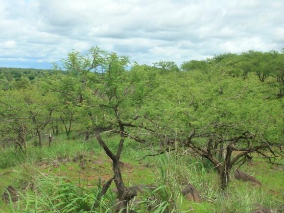Peste 500 de hectare vor fi împădurite la Bistrita