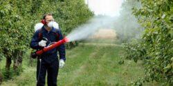 La aplicarea tratamentelor fitosanitare se impun masuri de protejare a albinelor