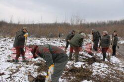 "140 de hectare de teren vor fi impadurite in ""Luna plantarii arborilor"" la Botosani"