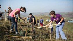 Padurea Transilvania, rezultata in urma celei mai mari impaduriri voluntare din Ardeal, se dubleaza