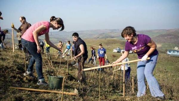 Pădurea Transilvania, rezultată în urma celei mai mari împăduriri voluntare din Ardeal, se dublează
