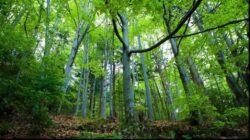 Adunarea ONU de Mediu din 2016 va dezbate securitatea mediului, la propunerea Romaniei