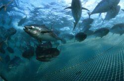 Oceanele are putea ramane fara peste pana in 2050, avand in vedere ritmul in care se pescuieste