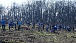 Peste 5.000 de puieti de stejar au fost plantati de voluntari in Parcul Natural Comana
