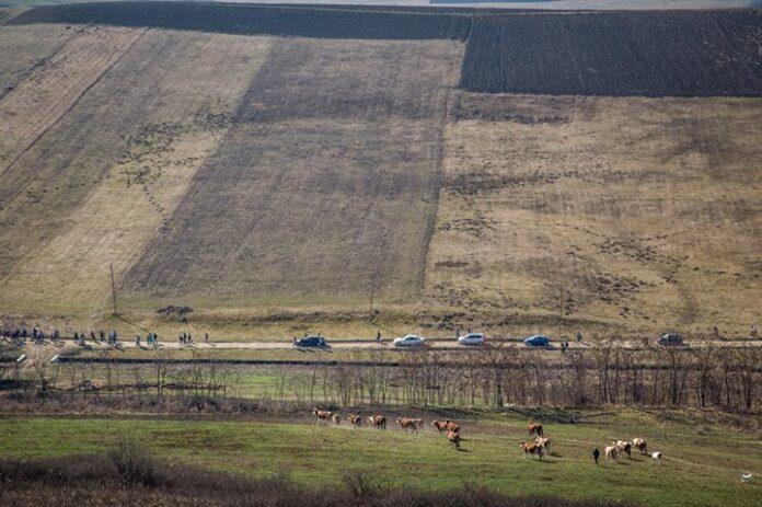 Acțiune de amploare, în Bistrița-Năsăud: 1.500 de voluntari au plantat zece hectare de pădure nouă