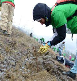 Laslaul Mare, impadurit de voluntarii CleanWood CO2