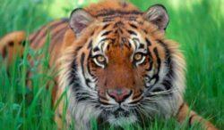 Vesti bune pentru 5 specii amenintate