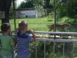 zoo calarasi
