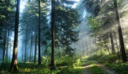 Liceeni din Banatul Montan se pregatesc sa devina ambasadori ai naturii