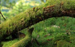 Defrisarea padurilor – o problema pentru stabilitatea ecosistemului