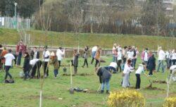 10.000 arbori vor fi plantati in Cluj-Napoca