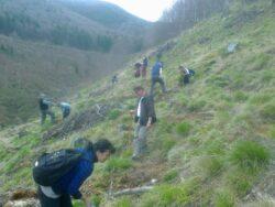 Actiune ecolologista in zona Cugirului. Elevi, profesori, brigadieri si padurari au plantat puieti de molid si paltin pe un versant din zona