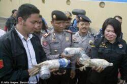 Cruzime fără margini: Papagali îndesaţi în sticle de plastic de traficanţi