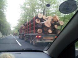 Lecție de civism! O profesoară a deturnat un transport ilegal de lemne