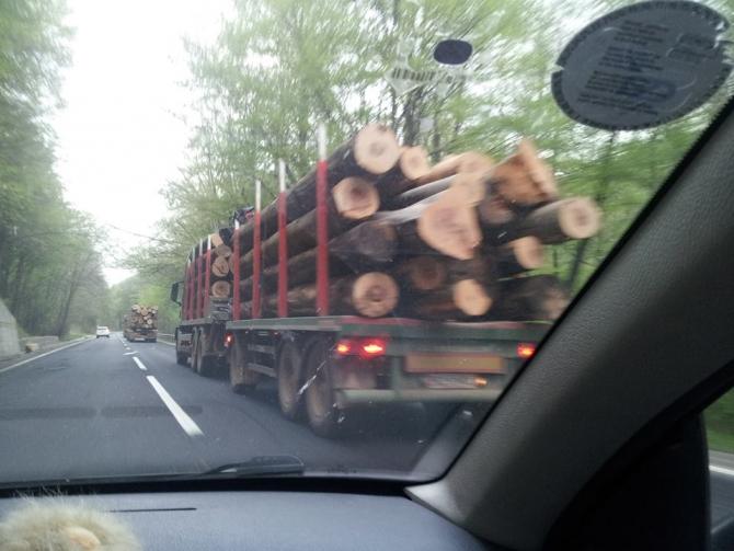Lectie de civism! O profesoara a deturnat un transport ilegal de lemne
