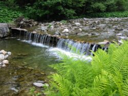 Izvoarele Rebrei - Parcul National Muntii Rodnei