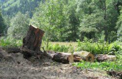 Garda Forestiera poate verifica oricand toti detinatorii de paduri sau terenuri cu vegetatie forestiera