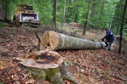 Despadurirea, principala problema de mediu a Romaniei