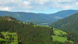 Agenţii 007 din pădurile României