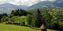 Romsilva: Fondul forestier proprietate publica a statului, in scadere cu 62.000 hectare in 2015