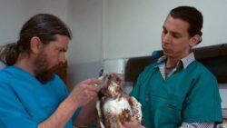 Medicii veterinari, chemati sa adere voluntar la o retea nationala pentru salvarea animalelor salbatice ranite