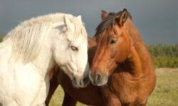 Caii îşi pot da seama când oamenii sunt fericiţi sau furioşi