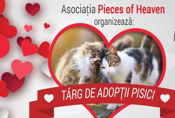 Târg de adopţii pisici, la Timişoara