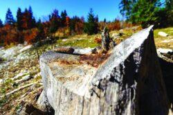 Cum este sabotat radarul care trebuia să ne salveze pădurea