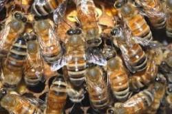Franta interzice pesticidul Cruiser OSR